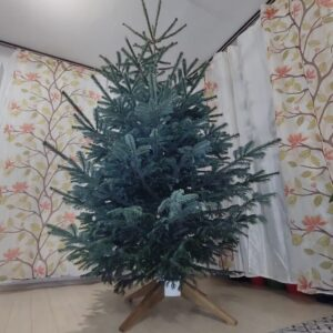 we just installed the Christmas tree